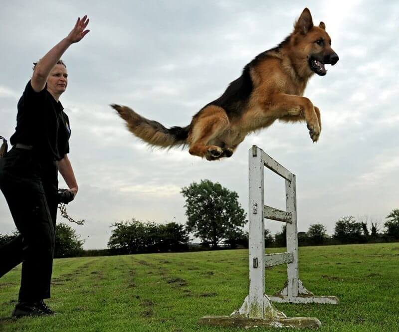 a dog training