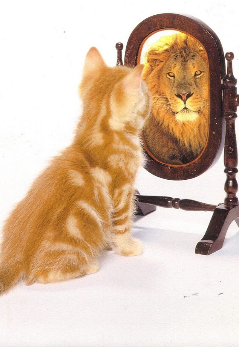 cat looking at the mirror