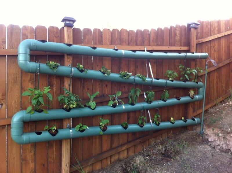 aquaponics on a fence