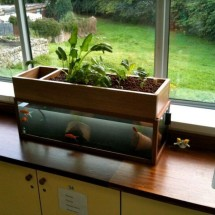 Home Diy Aquaponics Review - Worth or Waste of Time?