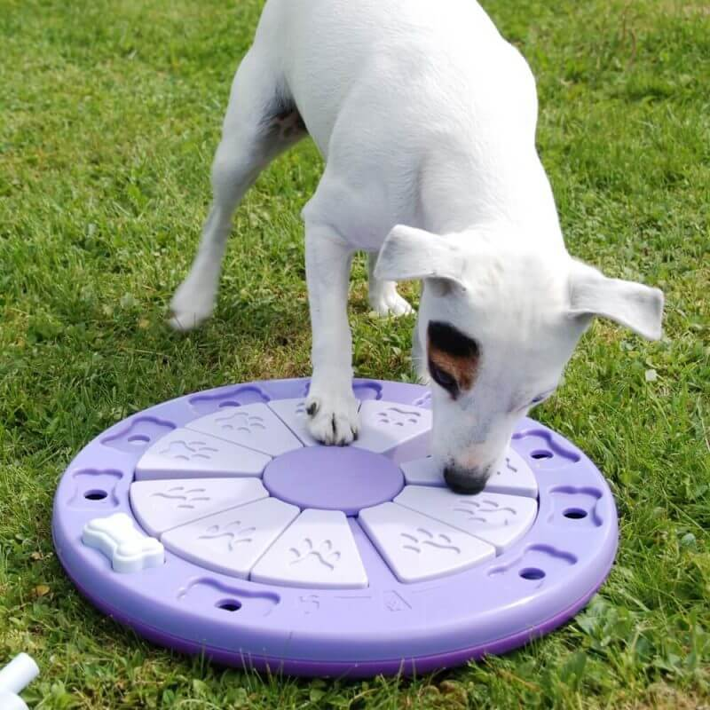 a white dog training
