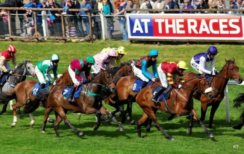 horses on a race