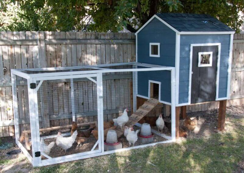 complete chicken coop painted blue