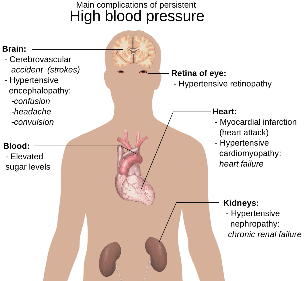 labelled parts of a human body