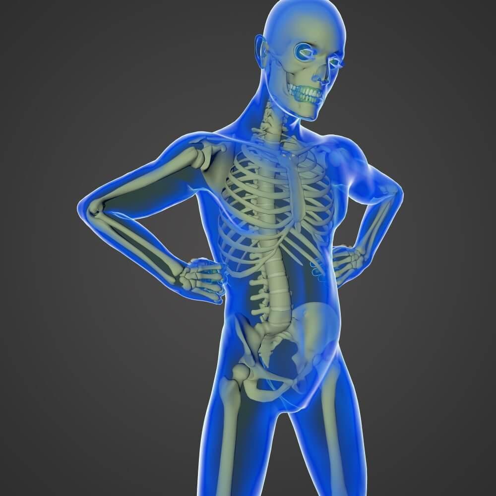 skeleton on a human