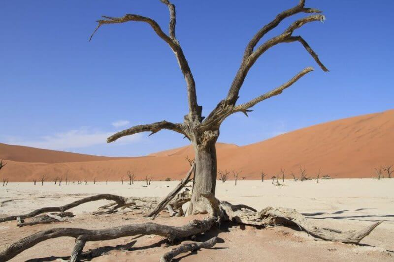 a dry tree in the desert