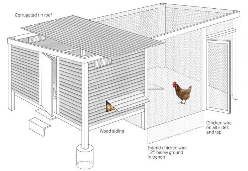 chicken coop illustration