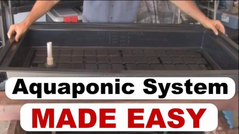 aquaponics system made easy