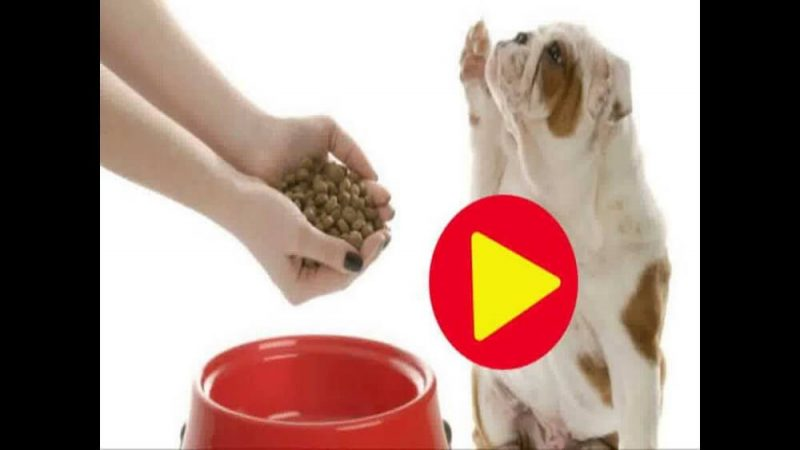hands of someone tyring to give a dog food