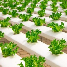 Getting Started In Hydroponics: Expert Tips, Plans & Secrets Review - Should You Really Buy It?