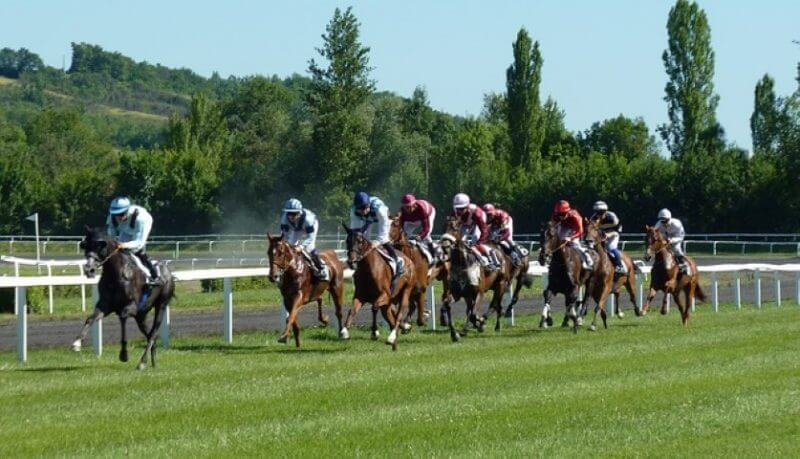 Throughbred Betting represented by a horse race