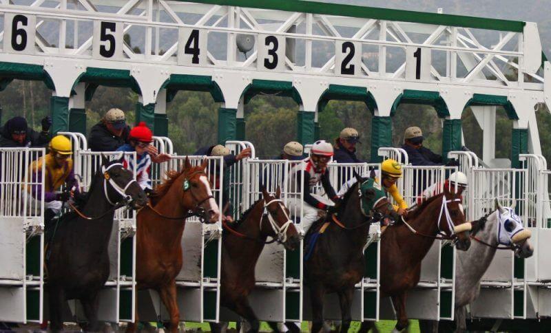 horses ready for a race