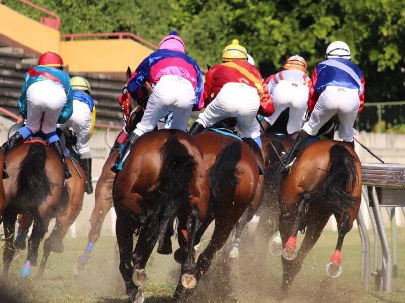 hourse racers racing