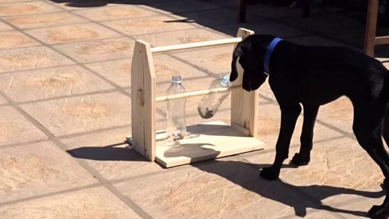 black dog oon a trainig session