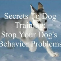 Secrets To Dog Training Review - Worthy or Scam? Read Before You Buy!