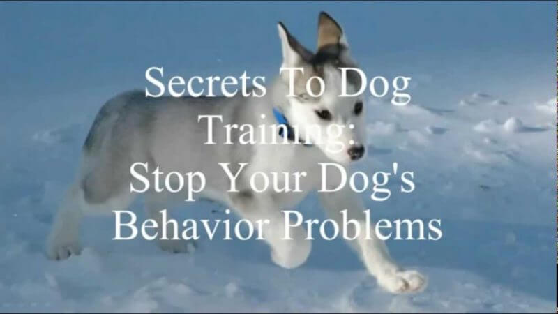 Secrets To Dog Training Review - Worthy or Scam?