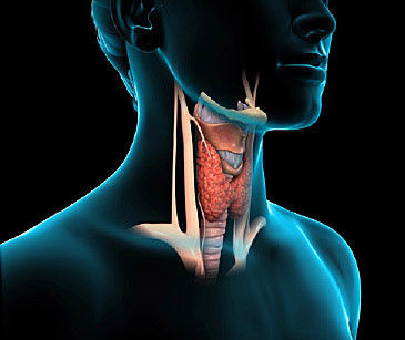 The Thyroid Factor