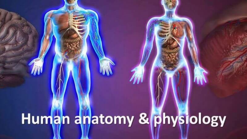 Unbiased Review: Should You Buy Human Anatomy and Physiology Course?