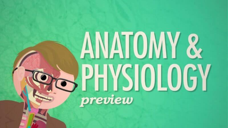 anatomy and pysiology review