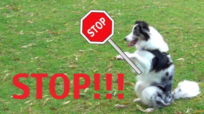 a dog and a stop poster