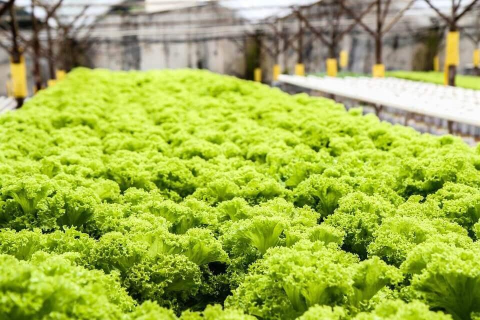 plants on hydroponics