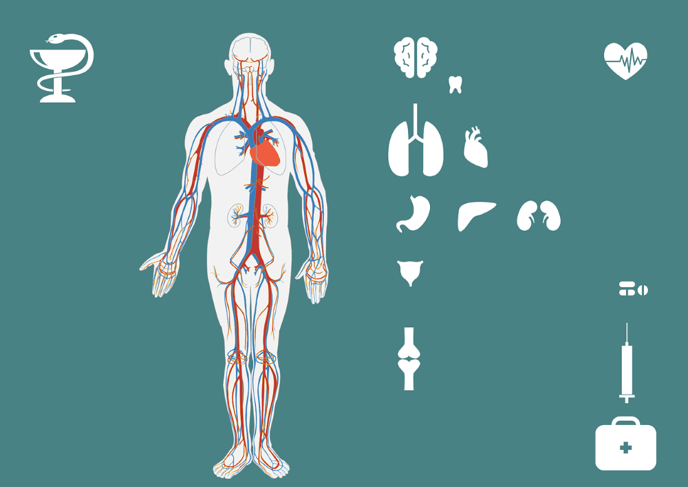 projection of human parts and body