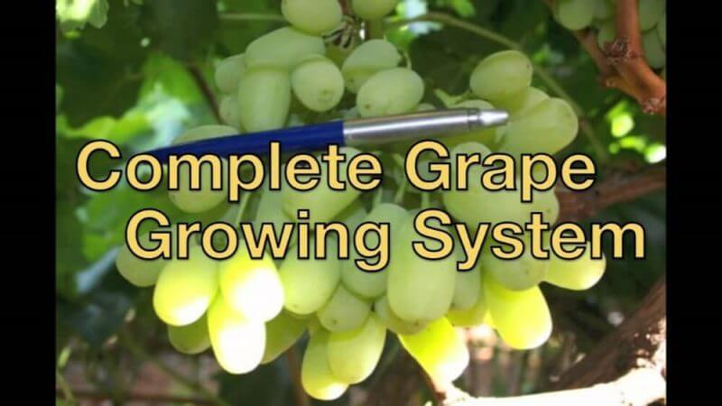 complete grape growing system