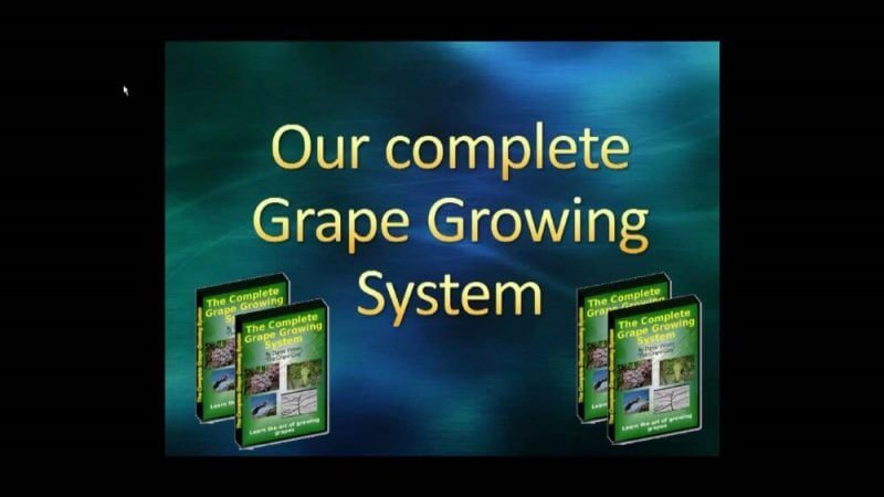our complete grape growing