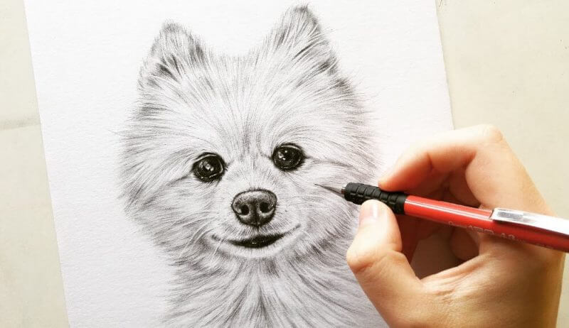 How To Draw Animal Portraits Review – Truth Exposed!!!
