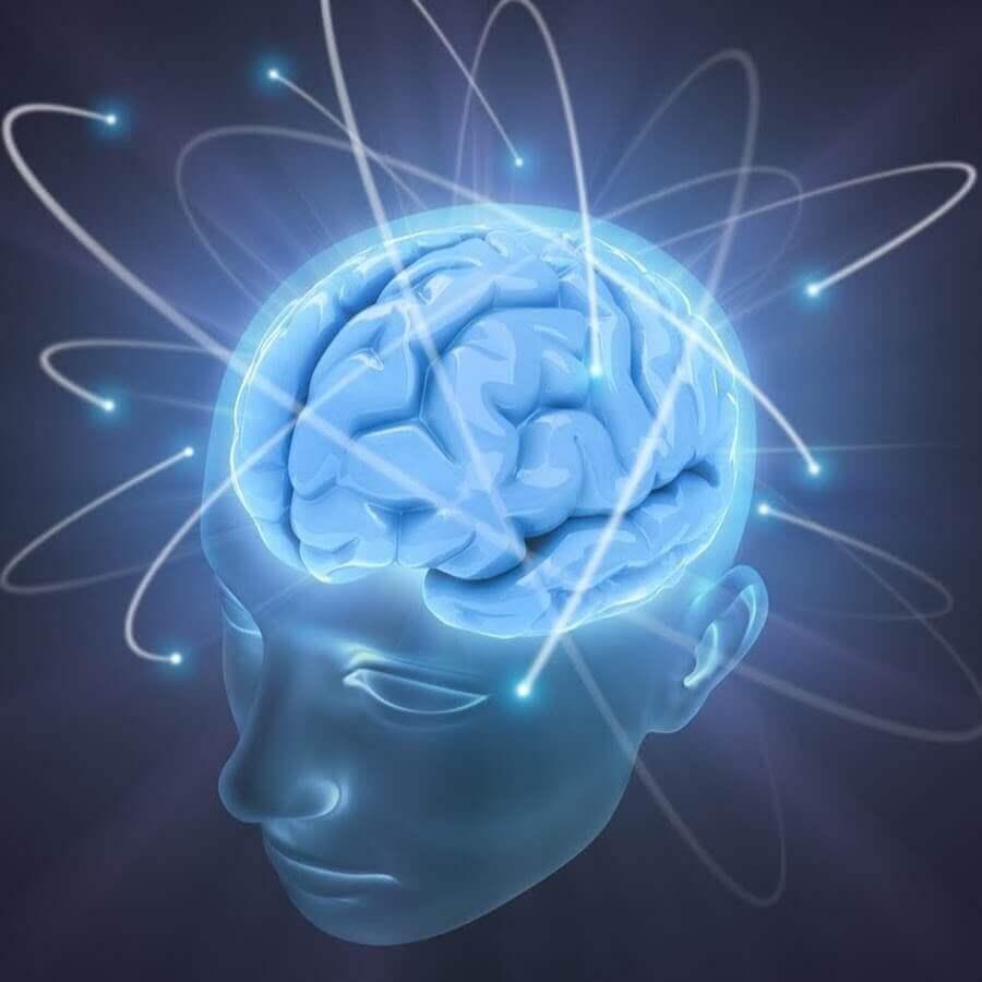 pic of human brain