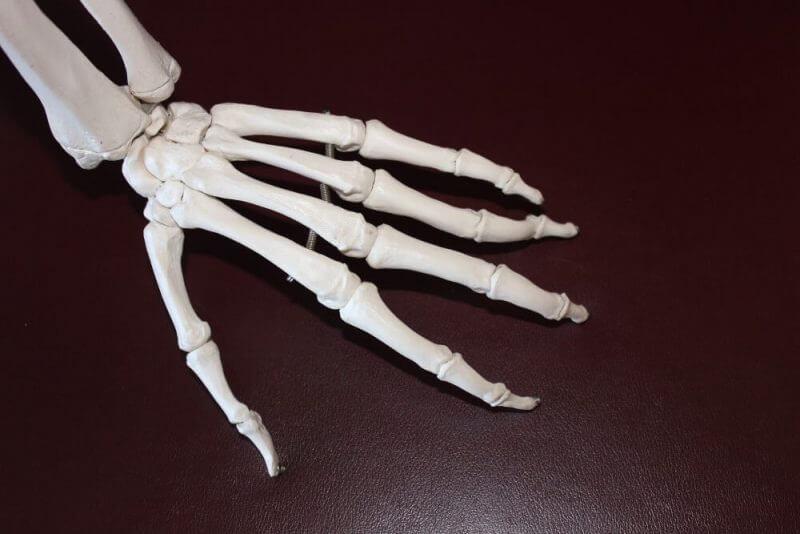 skull of a hand