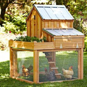 Building a Chicken Coop Review – Must Knowing Before You Buy