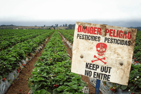 a field of plants with a pesticide warning signs in the front