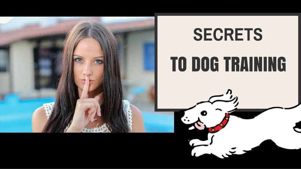a lady and secrets to dog trainig poster beside her