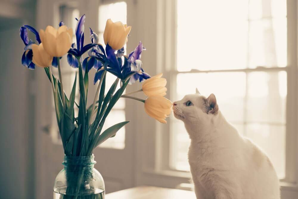 cat smelling some flowers