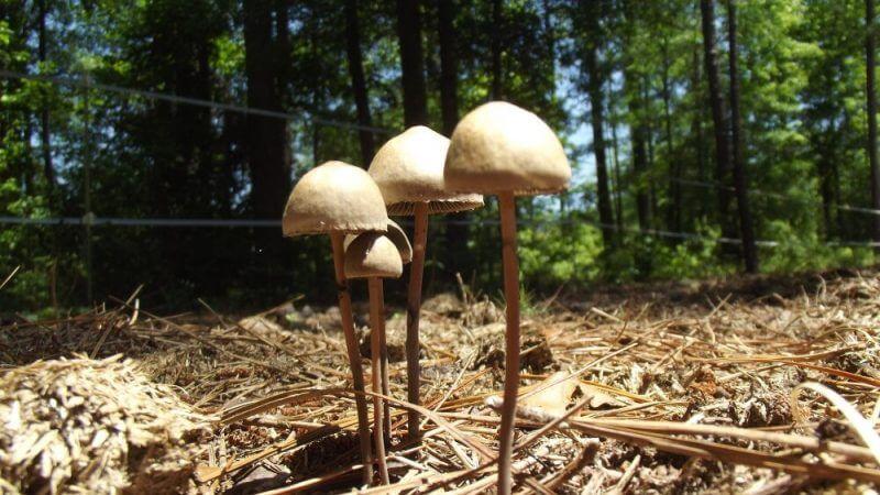 mushroom plant